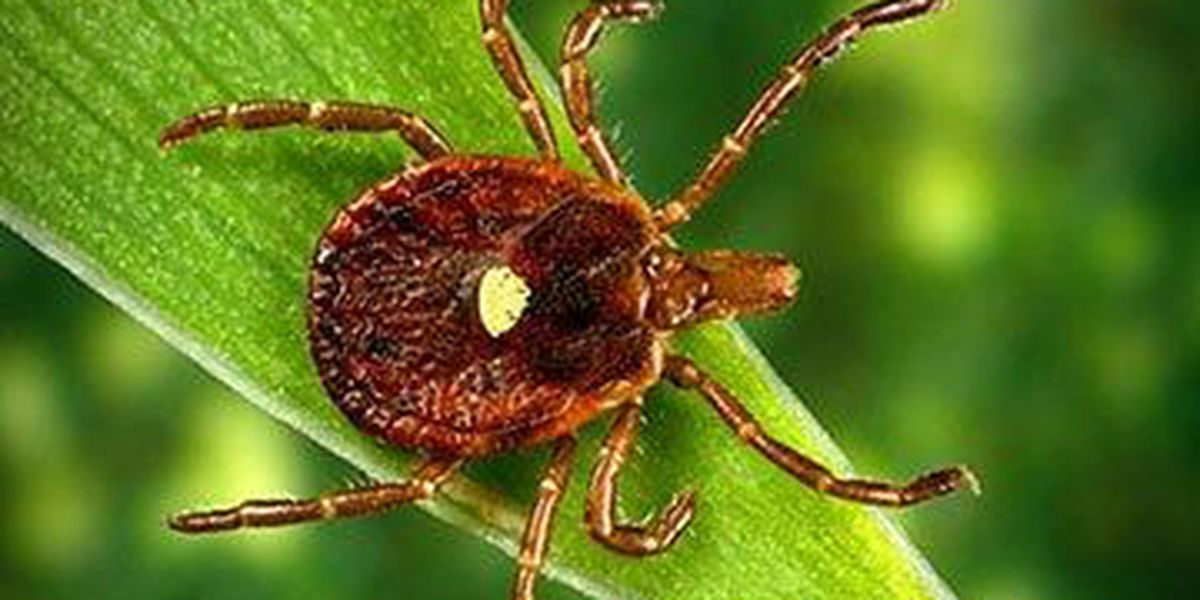 Health officials warns that ticks are on the rise in SC