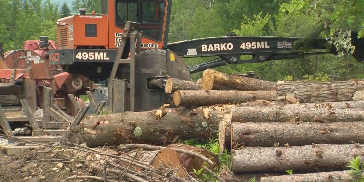 Forestry industry in South Carolina experiencing highs and lows because of the COVID-19 pandemic