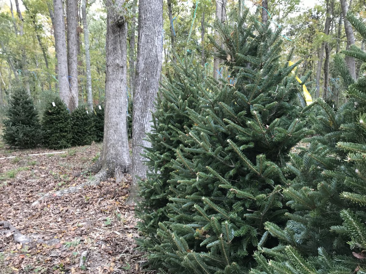 After the holidays pass, here's where you can recycle your Christmas tree in the Midlands