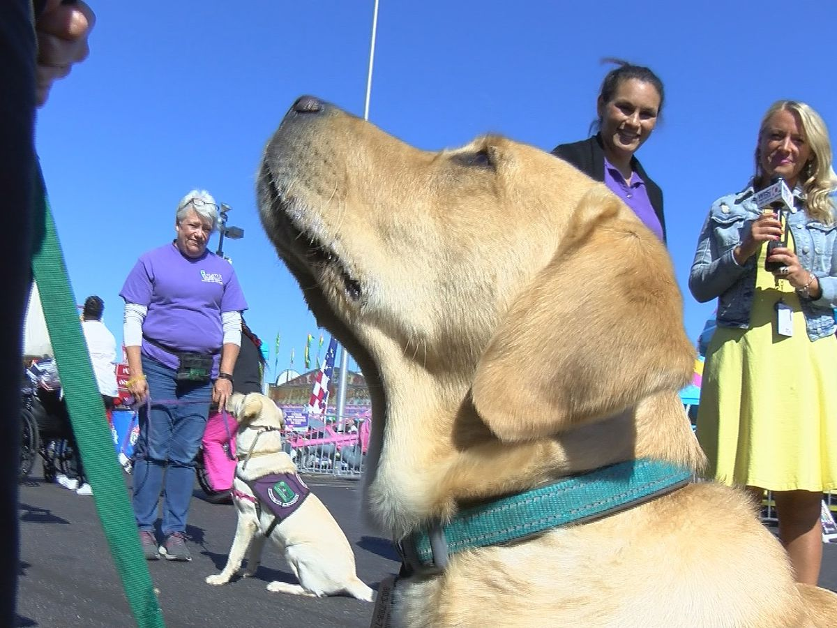 Service Dog Winston takes on the SC State Fair