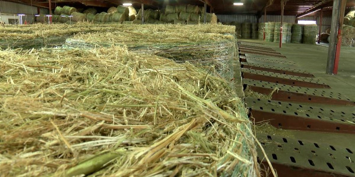 S.C. to begin issuing permits for hemp farming