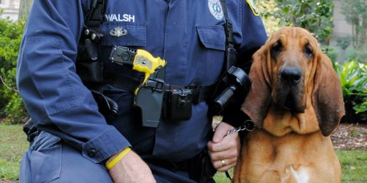 CPD announces death of K-9 officer