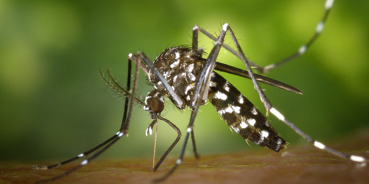 Florence resident contracts West Nile Virus after being bitten by mosquito