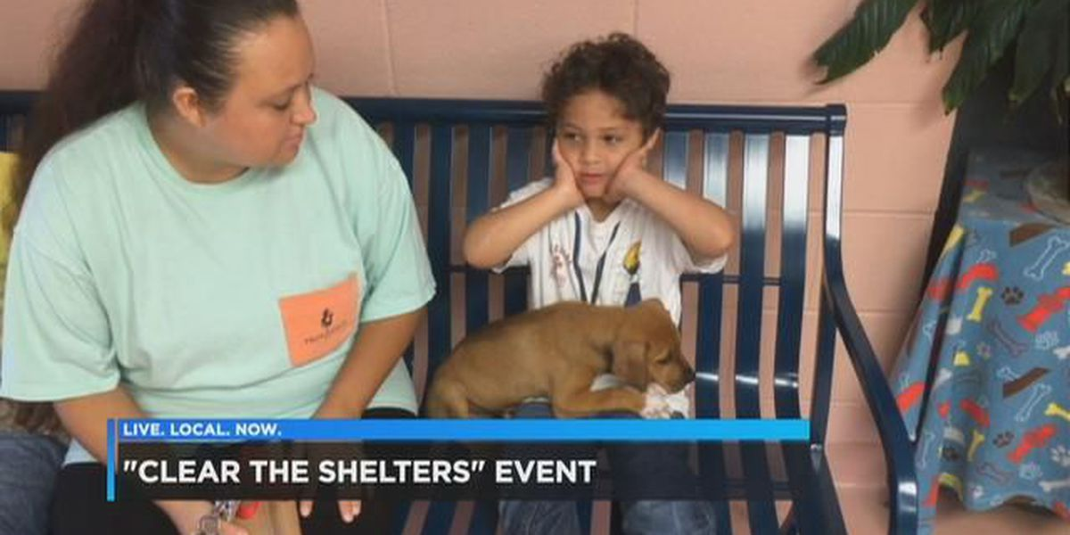 "Fur-babies find their ""fur-ever"" homes during annual adoption event"