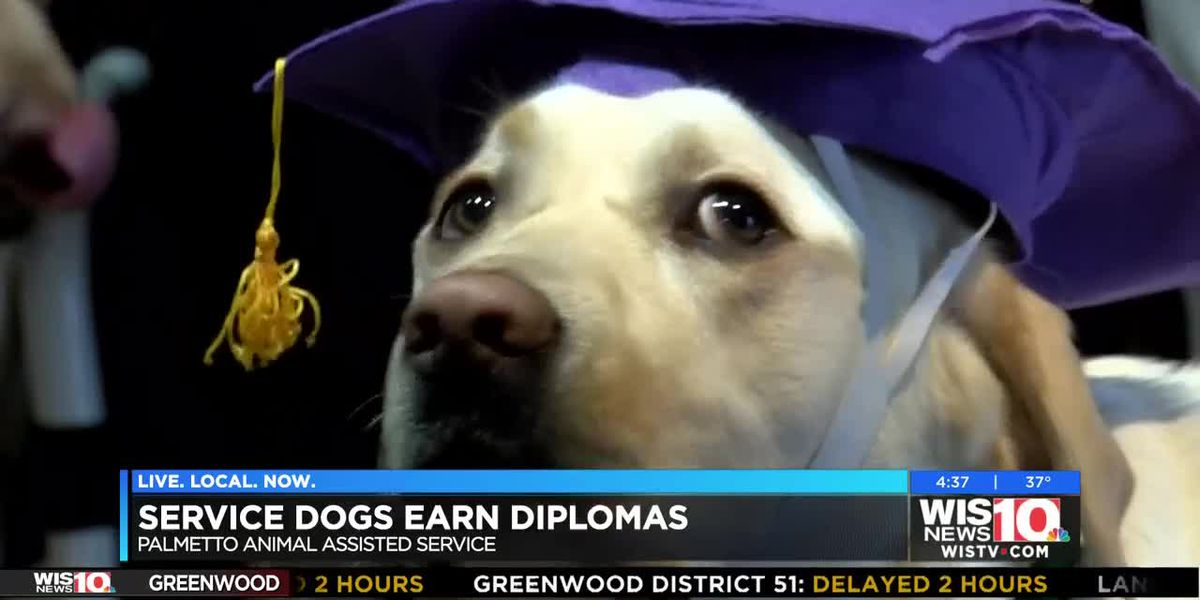 PAALs graduates new service dogs