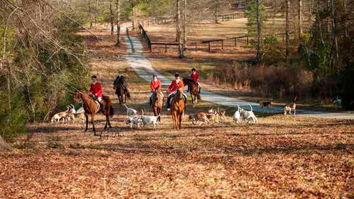 10 in Your Town: Nearly one century of fox hunting in Camden