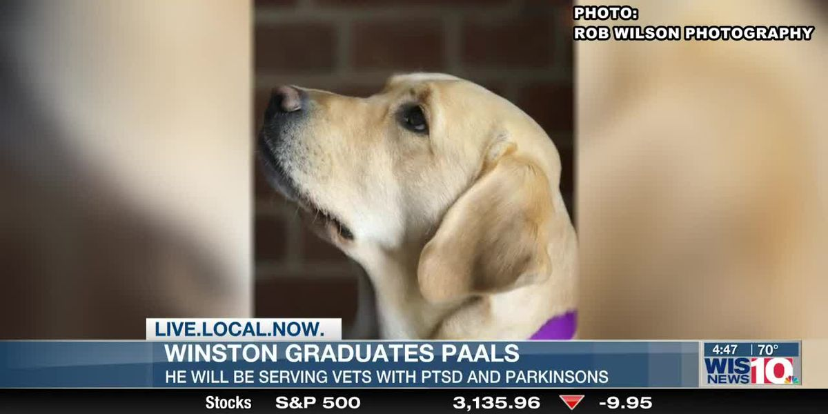 Who's that adorable pup with a diploma? It's Winston!
