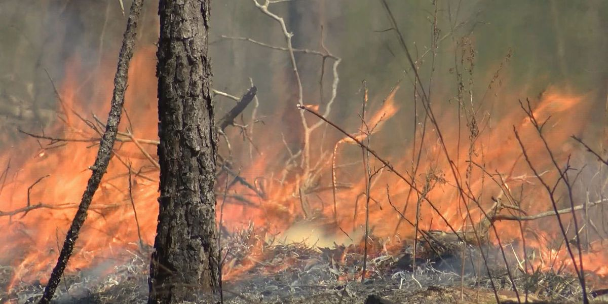 State Forestry Commission expects busy wildfire season
