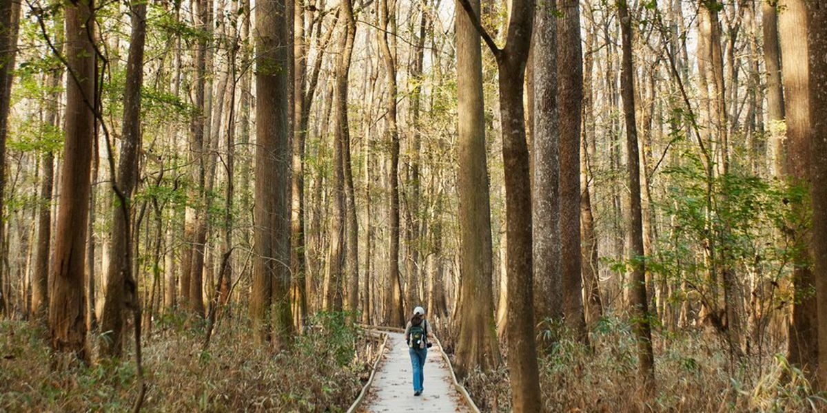 Congaree National Park remains open during partial government shutdown without a few amenities