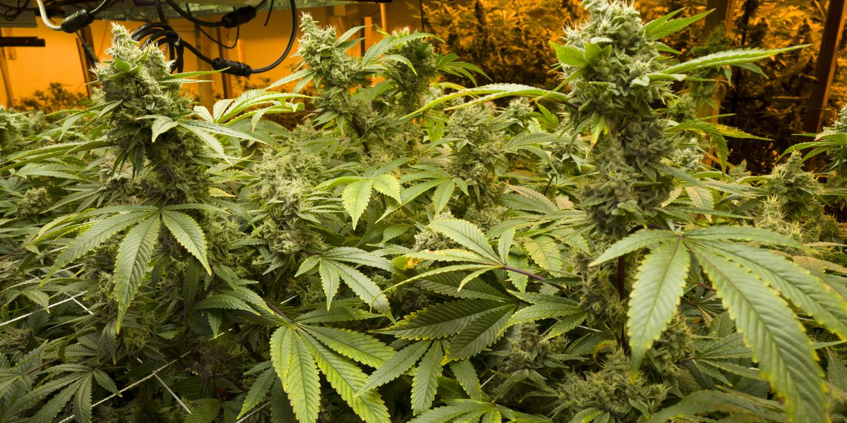 California court: Prison pot is OK - if inmates don't inhale