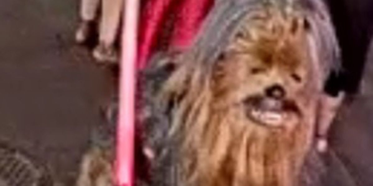 Chewbacca street performer wanted for allegedly stabbing someone in French Quarter