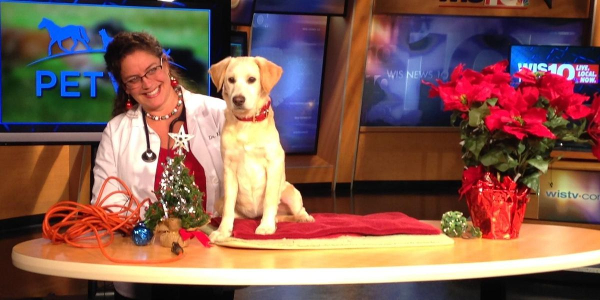 Holiday items can become health hazards to pets