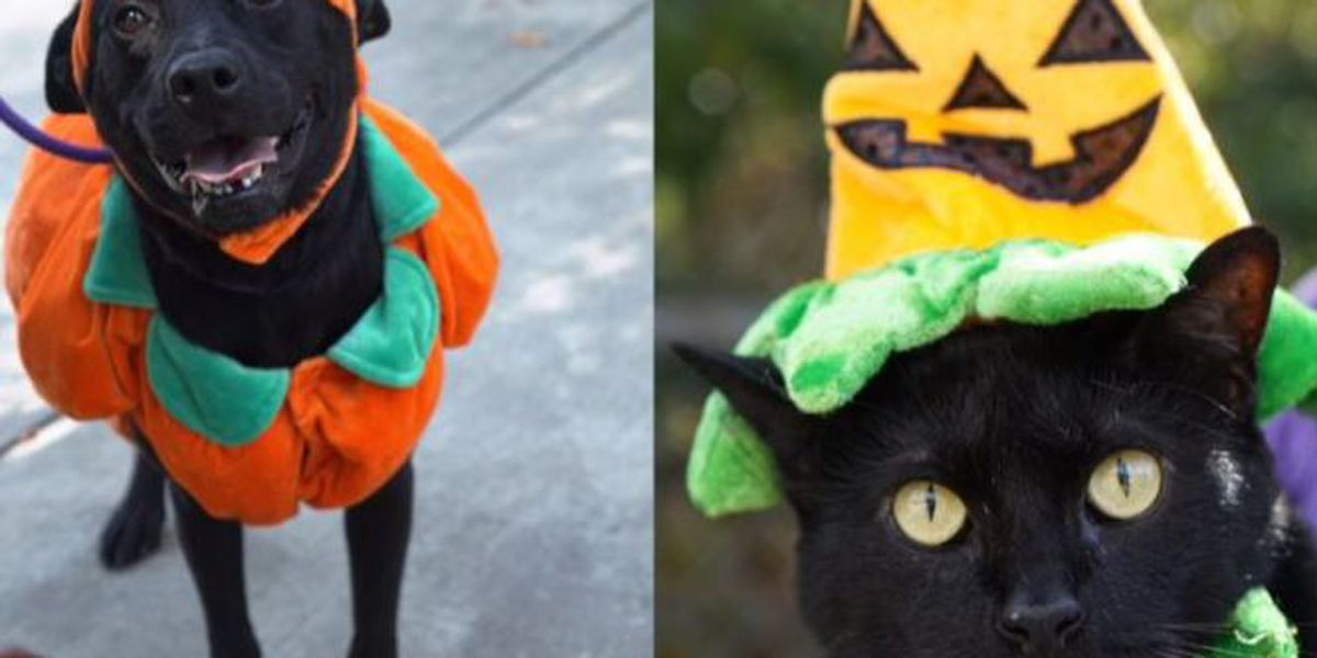 City of Columbia Animal Services hosting 'Come pick your pumpkin' pet adoption