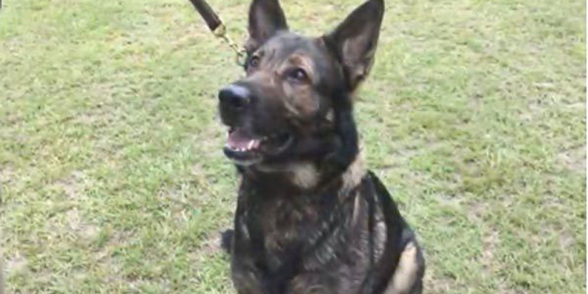 Meet Gus, K-9 officer who made one of the biggest heroin busts in Orangeburg Co. history