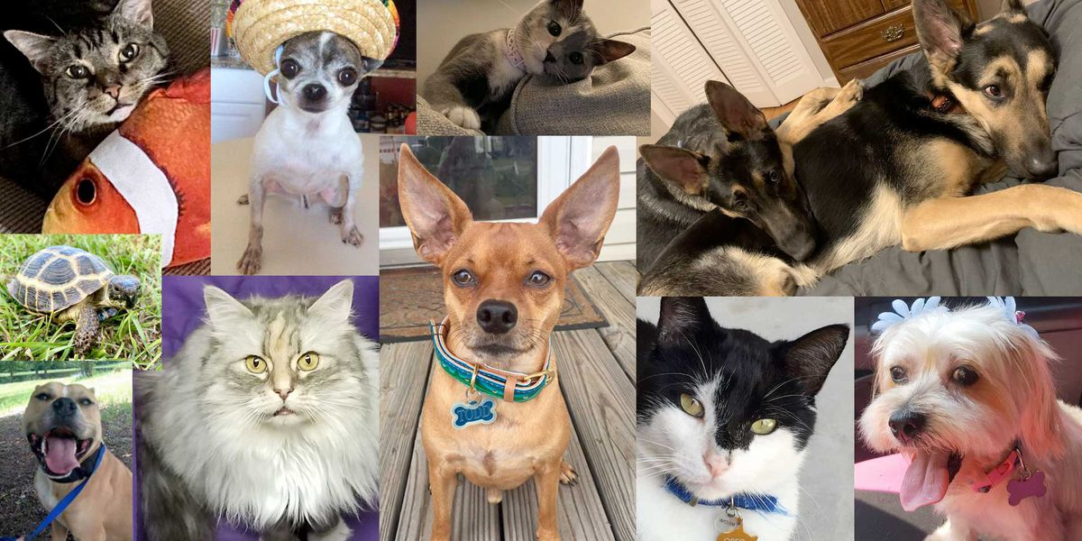 Celebrate National Love Your Pet Day by getting your four-legged friend on TV!