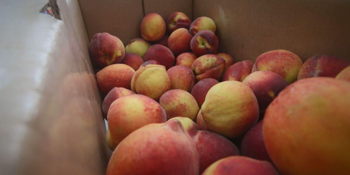Not so peachy: You'll likely pay more for a SC summertime staple