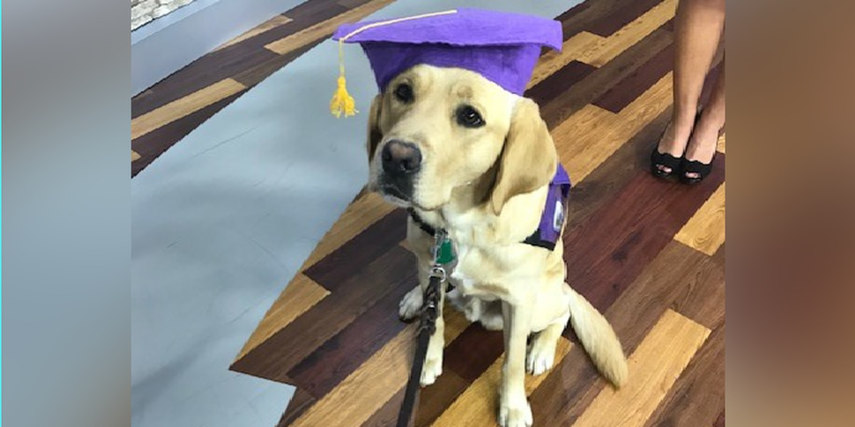 CUTENESS ALERT: It's all wags and puppy kisses as WIS' favorite 'good boy' gets ready to graduate