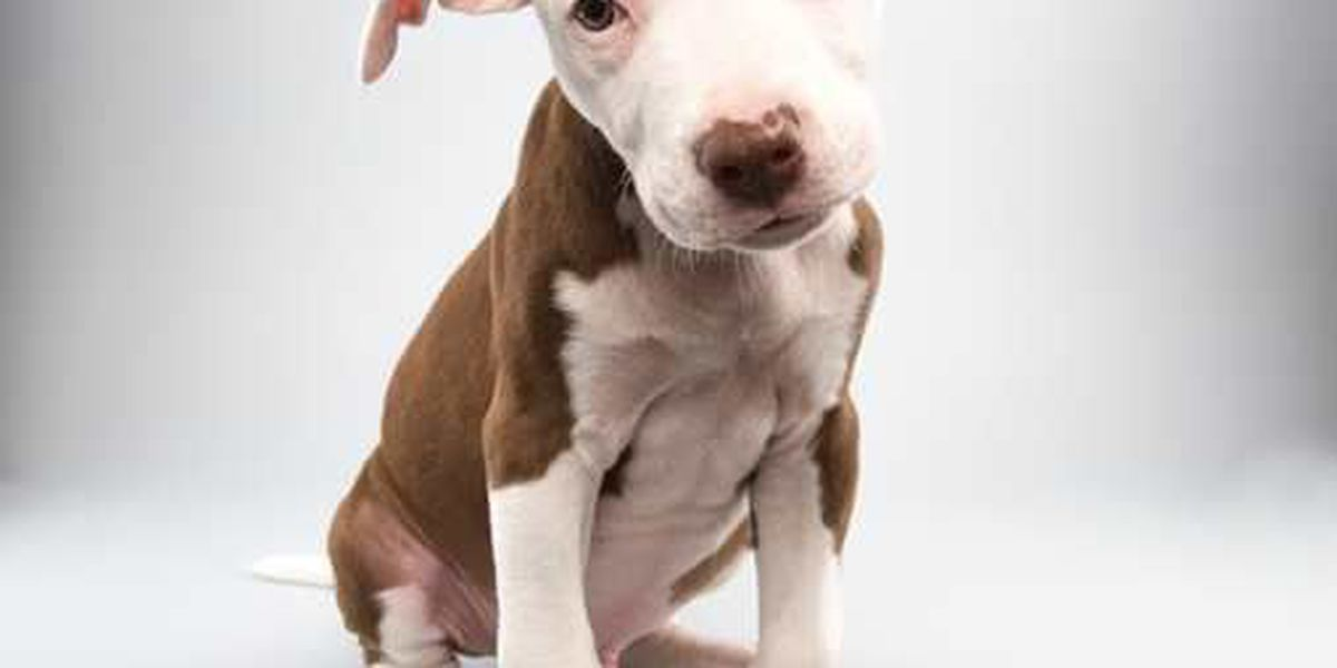 From cruelty victim to Puppy Bowl star: SC rescue puppy makes team