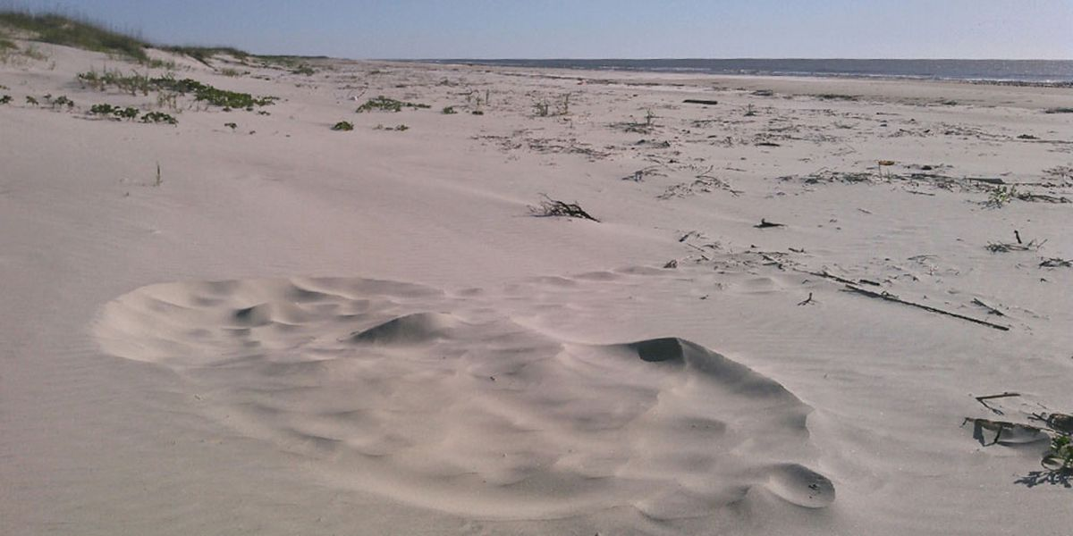 Georgia's first sea turtle nest of 2020 found on Cumberland Island