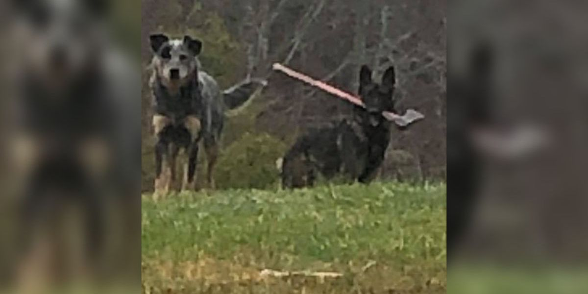 Kentucky mail carrier encounters ax-wielding dog on his route