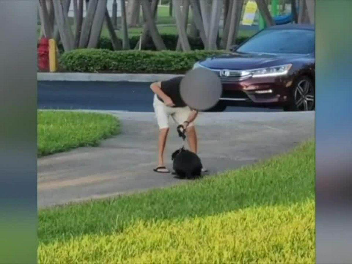 GRAPHIC: Police investigating Florida man caught on camera punching dog