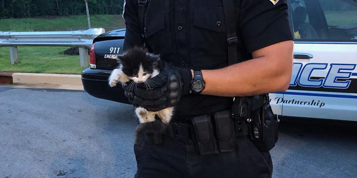 Lexington Police rescue trapped kitten, find him a forever home