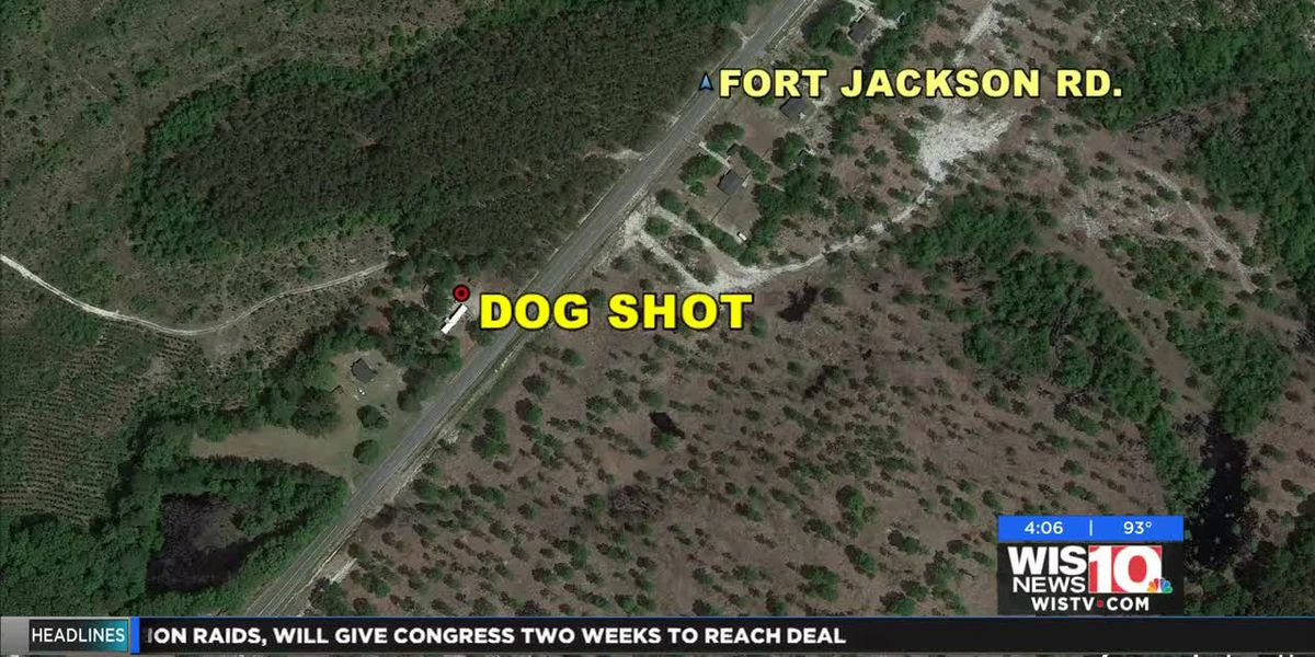 Kershaw Co. deputies open investigation after dog wounded in shooting