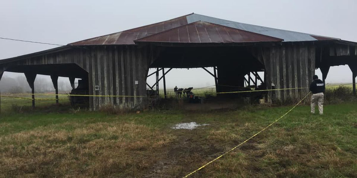 Human skull found during search for missing child