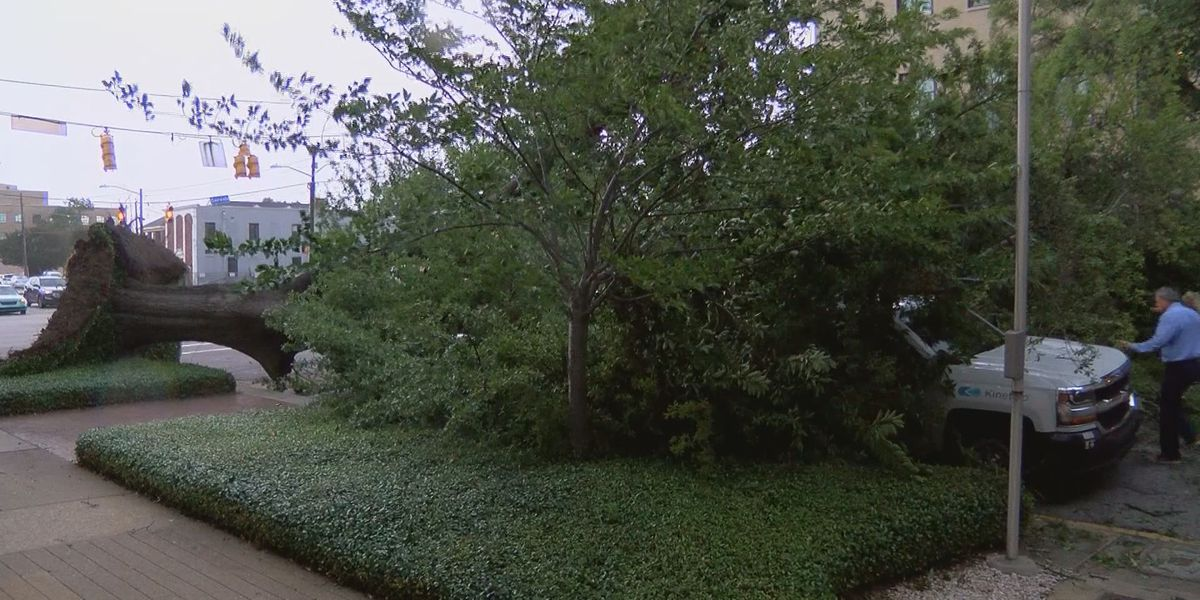 Man walks away unharmed after tree falls on car in downtown Columbia