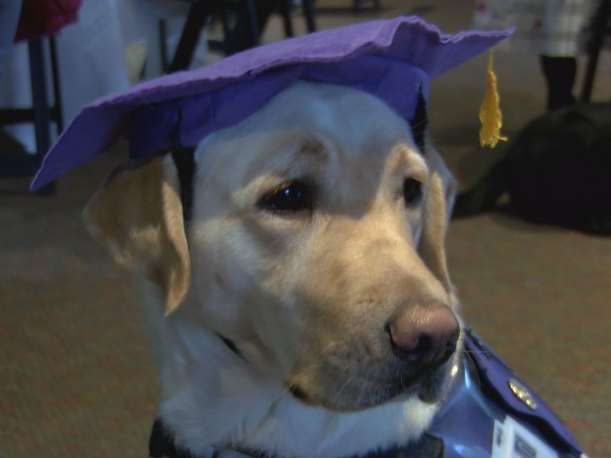 PAALS service dogs cross the stage for the cutest graduation ever